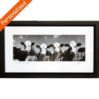 Curious Cows framed print, from an original photograph by Patrick Donald, signed by the photographer