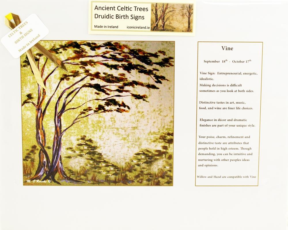 Druidic Birth Sign & Celtic Tree: Vine Sept 18th - Oct 17th ...